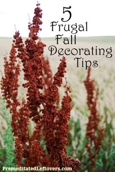 5 Frugal Fall Decorating Tips