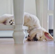 Encore trop sommeil ................ - Ely - Google+