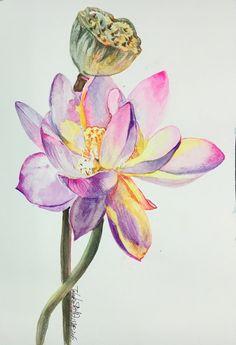 Watercolor Landscape, Watercolor Flowers, Watercolor Paintings, Colour Pencil Shading, Flower Art, Lotus Flower, Acrylic Painting Techniques, Botanical Drawings, Painted Pots