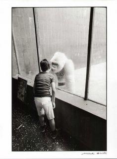 Albino gorilla, Michel Giniès