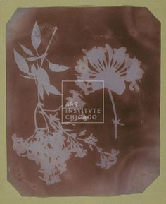 Photography - William Henry Fox Talbot, English, Two Plant Specimens, 1839, Photogenic drawing, Edward E. Ayer Endowment in memory of Charles L. Hutchinson, The Art Institute of Chicago (Image No. 00056818-01)