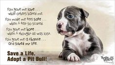 Save a Life..... Adopt a pitbull