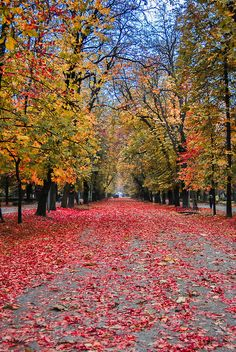 Autumn colors in Cluj-Napoca, Romania  (by Marius Gatea)