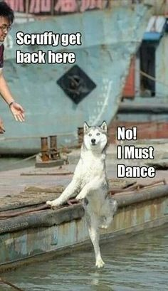 funny animals with captions - funny animals ; funny animals can't stop laughing ; funny animals videos can't stop laughing ; funny animals with captions ; Cute Animal Memes, Funny Animal Quotes, Animal Jokes, Cute Funny Animals, Cute Baby Animals, Cute Cats, Animal Captions, Dog Quotes, Funny Animals With Captions