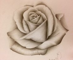 Hergestellt von Stella Luo Tätowierern in Toronto, Kanada - rose tattoos Stencils Tatuagem, Tattoo Stencils, Rose Drawing Tattoo, Tattoo Drawings, Flower Tattoo Designs, Flower Tattoos, 3 Roses Tattoo, Rose Zeichnung Tattoo, Realistic Rose Drawing