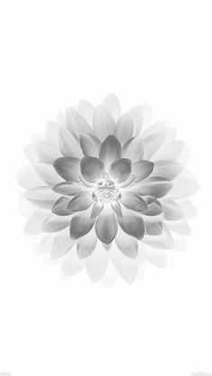 Get Inspired For White Background Hd Wallpaper For Iphone 6 pictures White Iphone Background, White Wallpaper For Iphone, Beautiful Wallpapers For Iphone, Flowers Black Background, 4 Wallpaper, Iphone 7 Wallpapers, Background Hd Wallpaper, Flower Wallpaper, Cute Wallpapers