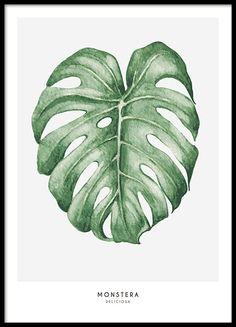 Botanische poster met illustratie van gatenplant bladeren, mooie groene bladeren op lichtgrijze achtergrond.- Een poster die mooi is in een collage met meerdere botanische poster of als kleuraccent in een zwart-witte fotowand. We hebben een breed assortiment van mooie botanische prints en posters. www.desenio.nl