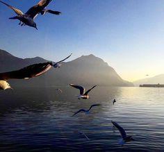 Trova la tua libertà sul #lagodiseo. Speriamo che questo weekend lungo possa essere un'occasione per rigenerarsi. Un'esperienza sul lago può aiutare... Scopri tutto il nostro mondo su: www.iseolake.info  Foto: @ema_cos_  #visitlakeiseo #theromanticchoice #inlombardia #italiait #ilikeitaly #laghilombardi #laghiitaliani #lago #iseolake #inlombardia365 #springinlombardia #ilpassaporto #romantico #charmingitaly http://ift.tt/2pFfCyp - http://ift.tt/1HQJd81