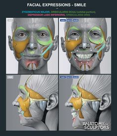 Exceptional Drawing The Human Figure Ideas. Staggering Drawing The Human Figure Ideas. Anatomy Head, Anatomy Study, Body Anatomy, Anatomy Drawing, Anatomy Art, Anatomy Reference, Art Reference, Anatomy Of The Face, Facial Muscles Anatomy