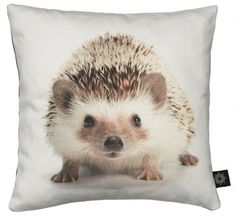 A soft thing with my soft spot for baby hedgehogs right on it. Jeepers they're cute.