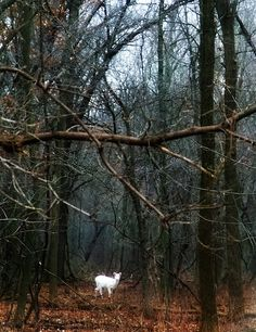 White (albino) deer....I saw one once and it was a very spiritual experience.