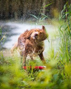 undefined Brown Bear, Thats Not My, Outdoors, Animals, Animales, Animaux, Animal, Outdoor Rooms, Animais