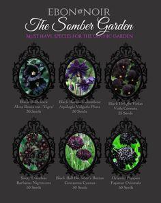 Gothic garden's must-have black flowers Gothic Flowers, Dark Flowers, Beautiful Flowers, Witchy Garden, Gothic Garden, Garden Plants, Indoor Plants, Poison Garden, Black Garden