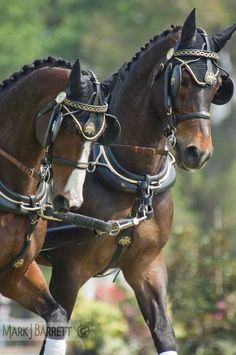 Horses :: combined driving competition team