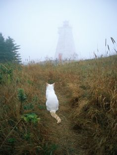 A White Cat Sits Facing the Swallowtail Lighthouse in the Fog Photographic Print