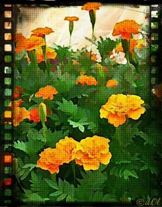#Nature  #Garden  #art  #photoart  #flowers