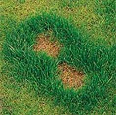 1000 images about grass burn on pinterest dog urine for How to fix dog urine spots on lawn