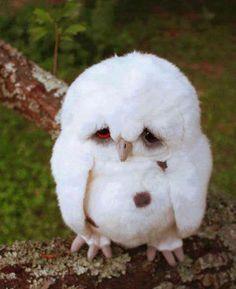 Tiny white owl
