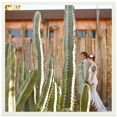 Bride and groom with cactus via One Love Photo.