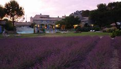 Provence Lavender Fields, Provence, Living Spaces, To Go, Mansions, World, House Styles, Villas, Places