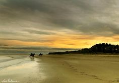 Horses on the beach at Curracloe by Lee Robinson Most Beautiful, Beautiful Places, Amazing Places, Wexford Ireland, The Good Place, Horses, Sunset, Beach, Water