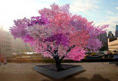 Sam Van Aken poder et frugttræ | 40 forskellige frugter | BO BEDRE | Bobedre.dk