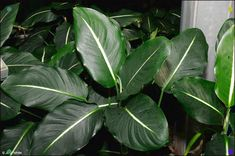 Garden Plants, Indoor Plants, Indoor Outdoor, Poisonous House Plants, Plant Identification, Unusual Plants, Plant Care, Houseplants, Garden Design