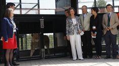 La Reina Sofía arropa la recuperación de felinos y primates en un centro pionero de Villena