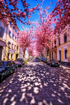 what a beautiful street to live on