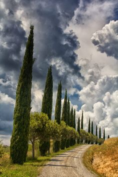Cypress row in Val d'Orcia (Tuscany, Italy) by Wolfgang Rejzlik