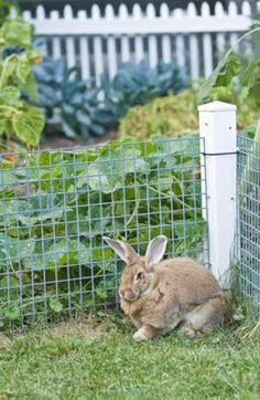 Rabbit proof garden fencing ideas i should really do something like this ive already lost 2 for How to keep rabbits out of garden without a fence