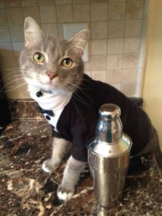 Tuxedo Cat outfit cat clothes by Catclothing on Etsy, $20.00 I need ... #cat - Care for cats at Catsincare.com!
