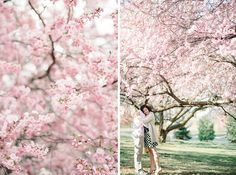 Branch Brook Park Engagement | New Jersey Engagement Photographer by Michelle Lange Photography