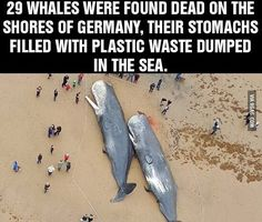 Plastic is one of the most harmful substances and yet it's polluting so much of our oceans...