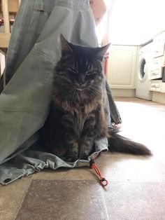 Rest in peace. Ill love you forever by Inversery cats kitten catsonweb cute adorable funny sleepy animals nature kitty cutie ca
