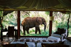 From a room in the Makanyane Safari Lodge, on the Madikwe Game Reserve, in South Africa