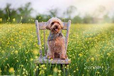 outdoor chair shot