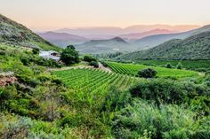 7 different ways to taste the Robertson Wine Valley