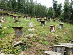 Ancient hives, Madrid spain