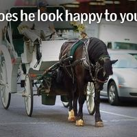 BAN HORSE-DRAWN CARRIAGES!