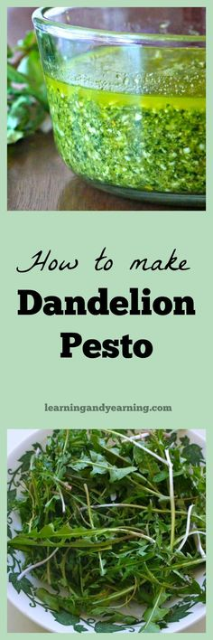 Are you wondering how to use dandelion greens? You can likely walk out your door and harvest all the leaves you need for delicious dandelion pesto in a matter of minutes. You'll want to try this recipe because dandelion pesto is amazing. Foraging for food Dandelion Leaves, Dandelions, Raw Food Recipes, Cooking Recipes, Healthy Recipes, Healthy Food, Healthy Eating, Dandelion Recipes, Edible Wild Plants