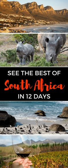 Thinking of planning a trip to South Africa? Here's a sample itinerary that will help you see the best of South Africa in less than two weeks. Africa Destinations, Travel Destinations, Holiday Destinations, Namibia, African Safari, Africa Travel, Travel Inspiration, Travel Ideas, Travel Tips
