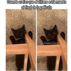 "11 Me gusta, 0 comentarios - Gatos Cool (@gatoscooloficial) en Instagram: "". . .. . #memesdegatoscool #gatoscool😸 #gatos_cool #villano #villanos #peliculademiedo…"" Funny Animal Memes, Cute Funny Animals, Funny Relatable Memes, Funny Animal Pictures, Cute Baby Animals, Cat Memes, Funny Cute, Cute Cats, Funny Jokes"