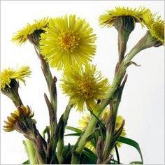 Kvety podbeľu
