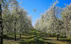 """Η Κομισιόν προωθεί την """"έξυπνη γεωργία"""" για να αντιμετωπίσει την κλιματική αλλαγή"""