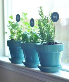 Aerogarden Herb Seed Kits Aerogarden Seed Pod Kits Grow A 400 x 300