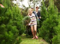 #High Star #Christmas #Tree Farm To http://houston.kidsoutandabout.com/
