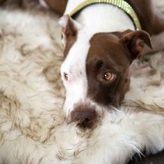 Animals Matter® Ortho Shag Bed Rug