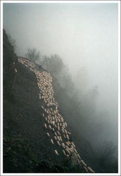 THE SHEPHERDS WAY, dima gomberg photography, design squish blog