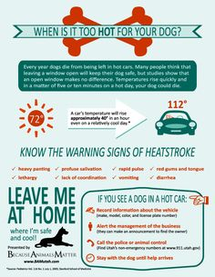 When is it too hot for your dog?